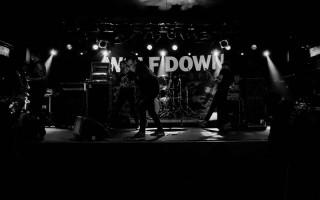 Wolf Down